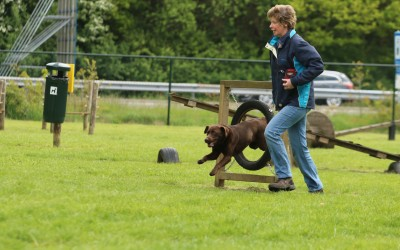De hondenspeeltuin Midden Drenthe