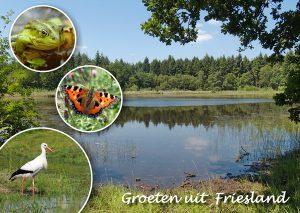 Natuurlijke Foto Workshop Fotografie Friesland