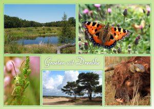 Natuurlijke Foto Workshop Fotografie Drenthe