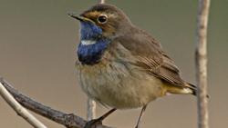 Vogelexcursies Texel