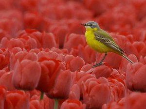 Vogelinformatiecentrum Texel