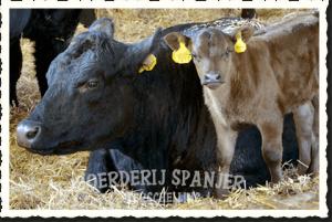 Ecologische Boerderij Spanjer Terschelling