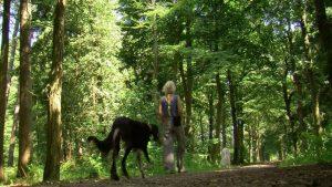 Natuurcamping De Waps Oudemirdum