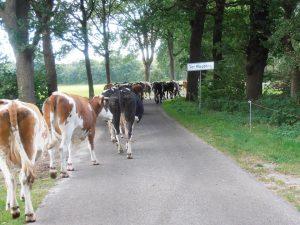Bio-boerderij 'Landleven' Onstwedde
