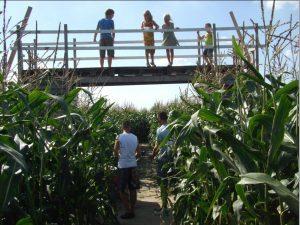 Bloemenboerderij & Maisdoolhof Saaxumhuizen