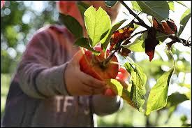 Boerderijcamping De Fruitgaard Noordbroek