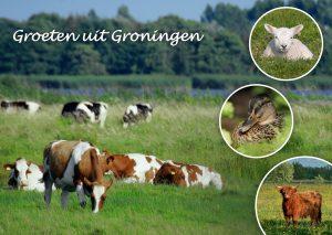 Natuurlijke Foto Workshop Fotografie Groningen