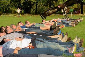 Birds@Work Valkerij Manege Legemeer