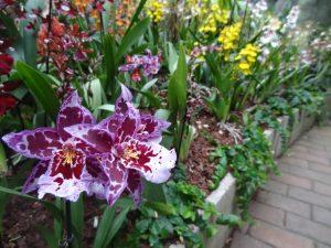 Reinhart Orchideeën Haren