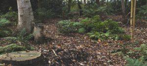 Natuurbegraafplaats Friesland