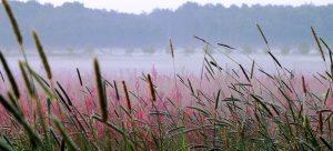 Reiderwolde Natuurbegraafplaats