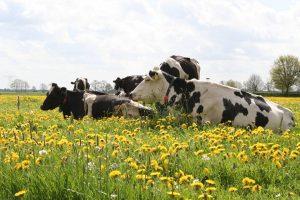 Biologische boerderijwinkel Wilma's ERF Onnen