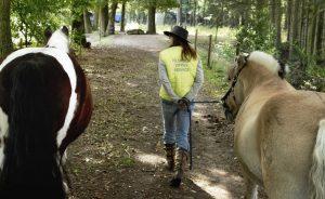 Jij op vakantie, Paarden Oppas Service voor je paard!