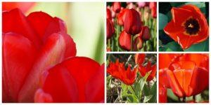 Biologische bloembollen Natural Bulbs