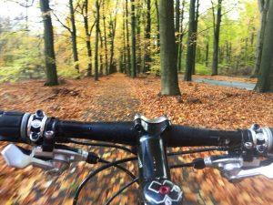 Beleef het Drentse bos met Fatbikes Verhuur Drenthe