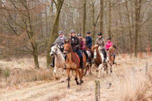 Knollegruun de leukste groepsaccommodatie voor de ruitersporter in Nederland