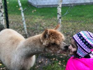 Ontmoet de Alpaca's van Zonneveld!