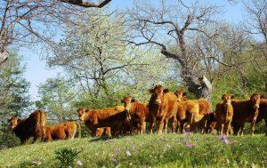 Biologisch Vlees uit de Natuur Assen