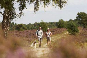 De leukste wandeluitjes en fietsuitjes van Drenthe