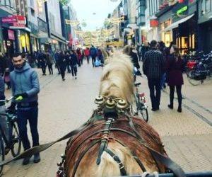 Biogroen Paardentram Rondritten Groningen