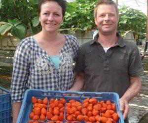 Boerderijwinkel & Groentekwekerij Dallinga Zuidbroek