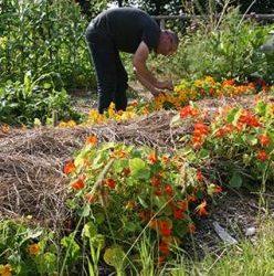 De groenste workshops in Fryslân door Roeach