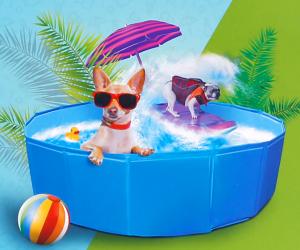 Je hond lekker koel houden in de zomer