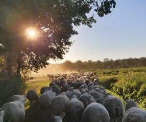 Biologische schapenmelkerij en boerderijwinkel 't Schoone Schoap