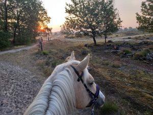 Trektochten met je paard in het Drents Friese Wold